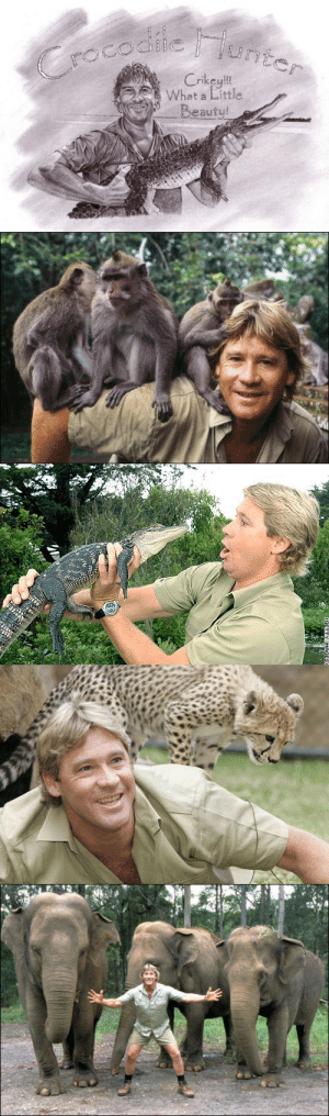 conservationofhope:  Steve Irwin Day, celebrated each year on 15 November, is an annual international event honoring the life and legacy of the one and only Crocodile Hunter, Steve Irwin! Steve Irwin Day represents the many things Steve was passionate about: FAMILY, WILDLIFE CONSERVATION and FUN! Khaki is more than a colour. It's an attitude. It's a stand to do something positive in our world and a passion to make a difference. And when you make a difference – you KHAKI IT! Khaki is a symbol of Steve Irwin, the original Crocodile Hunter and Wildlife Warrior. At Australia Zoo and Australia Zoo Wildlife Warriors – we continue the legacy of Conservation, Family and Fun that Stevo created – and every day – we KHAKI IT! When you see that khaki uniform, it is a sign that somebody is there to get in and get their hands dirty and save an animal or campaign for wildlife conservation. You don't have to be Terri, Bindi or Robert Irwin or a member of the Zoo Crew to be a Wildlife Warrior. Anyone can make a difference. Anyone can KHAKI IT!  Here are some more ideas on how you can KHAKI IT on Steve Irwin Day: Wear khaki and make a donation to Australia Zoo Wildlife Warriors Celebrate at Australia Zoo on 15 November Renew, reuse and recycle Clean up your local beach Build a possum box or a frog pond in your backyard Lock up your dogs and cats at night. http://www.youtube.com/watch?v=QJEGq-SBo2Y: CroCodilie junt  Crikey!!  What a Little  Beauty!   IMAGES) conservationofhope:  Steve Irwin Day, celebrated each year on 15 November, is an annual international event honoring the life and legacy of the one and only Crocodile Hunter, Steve Irwin! Steve Irwin Day represents the many things Steve was passionate about: FAMILY, WILDLIFE CONSERVATION and FUN! Khaki is more than a colour. It's an attitude. It's a stand to do something positive in our world and a passion to make a difference. And when you make a difference – you KHAKI IT! Khaki is a symbol of Steve Irwin, the original Crocodile 