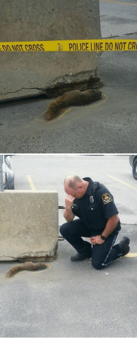 meanwhile, in canada: CROSS POLICE LINE DO NOT CR meanwhile, in canada