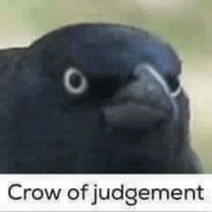 When someone posts a meme about their home game or characters which is impossible to relate to.: Crow of judgement When someone posts a meme about their home game or characters which is impossible to relate to.