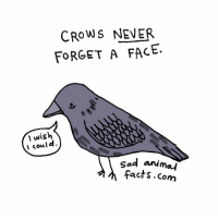 Dank, Facts, and Animal: CROWS NEVER  FORGET A FACE.  wish  I could.  sad anima  facts.com Sad Animal Facts