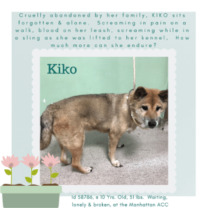 """Being Alone, Animals, and Children: Cru elly abandoned by her family, KIKO sits  forg otten& alone. Screaming in pain on a  walk, blood on her le as h, scre aming while in  a sling as sh e was lifted to her kennel, H o w  m uch more can she endure?  Kiko  d 58786, e 10 Yrs. Old, 31 lbs. Waiting,  lonely & broken, at the Manhattan ACC TO BE KILLED – 4/9/2019  How lonely she must be, how sad and lost and alone. How does one feel when you are 10 years old (what is that? 90 in human years?), and you find yourself in the winter of your years abandoned in a shelter and forgotten KIKO had a microchip, but clearly her family no longer cared. And despite mediocre medical notes, in a heartbreaking turn, Kiko was out walking 2 days ago when she began """"screaming and resisting the lead."""" They noted her poor haircoat was dirty under her right armpit and near her neck, where they found blood on her leash. The had to lift poor Koko, using a blanket as a sling, to get her into her kennel. All the while she was screaming and biting at the towel, because her abdomen seemed painful in the sling! What more can she endure, and how much more should she suffer. Her breed is a noble one, an independent one, but more than anything right now, this poor senior lady needs a family who will give her care, comfort, a soft place to land where she can decompress and then warm at her own pace to her new home and family. Please open your heart and home to KIKO. Her life was spent giving everything she had to a family, a family who, in the end, cruelly abandoned her. Hurry and MESSAGE our page or email us at MustLoveDogsNYC@gmail.com for assistance fospicing or adopting KIKO.   KIKO, ID# 58786, 10 Yrs. old, 31.4 lbs, Unaltered Female Manhattan ACC, Medium Mixed Breed (Shibu Imu), Color: Red Roan I was brought to the shelter as an Agency, 4/1/2019 Shelter Assessment Rating: NEW HOPE ONLY  Medical Behavior Rating: 4. Orange  AT RISK MEMO: Kiko is at risk for behavioral and medical reasons. Kiko has not """