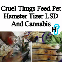 HU Staff: Kecia Gayle @kecia.cecilia Two cruel thugs from Lancaster, Lancashire in the U.K. filmed themselves feeding a hamster Tizer laced with LSD and a cannabis leaf, to see how it reacted. ____________________________________________________ Corey Lee Destrow, 22, and his friend, Nchinmunya Ntembe, 22, were sentenced in January for dosing the hamster named Mr. Chow with the powerful hallucinogenic, but the shocking video has just surfaced online. ____________________________________________________ Read more at thehollywoodunlocked.com: Cruel Thugs Feed Pet  Hamster Tizer LSD  And Cannabis HU Staff: Kecia Gayle @kecia.cecilia Two cruel thugs from Lancaster, Lancashire in the U.K. filmed themselves feeding a hamster Tizer laced with LSD and a cannabis leaf, to see how it reacted. ____________________________________________________ Corey Lee Destrow, 22, and his friend, Nchinmunya Ntembe, 22, were sentenced in January for dosing the hamster named Mr. Chow with the powerful hallucinogenic, but the shocking video has just surfaced online. ____________________________________________________ Read more at thehollywoodunlocked.com