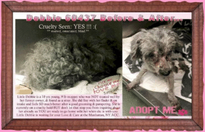 Animals, Desperate, and Dogs: Cruelty Seen: YES !!  * matted, emaciated, blind *  Choose m  ove m  Little Debbie is a 10 yrs young, 9 lb moppet who was NOT treated well by  her former owner, & found as a stray. She did fine with her finder & on  intake and feels SO much better after a good grooming & pampering. She is  currently on a cruelty hold BUT don't let that stop you from inquiring about  ADOPT ME  her already so YOU are ready to go home wiht her when she is with you  Little Debbie is waiting for your Love & Care at the Manhattan, NY ACC **FOSTER or ADOPTER NEEDED ASAP** Cruelty Seen: YES !!! :( Little Debbie is a 10 yrs young, 9 lb BLIND moppet who was NOT treated well by her former owner, & found as a stray. She did fine with her finder & on intake and feels SO much better after a good grooming & pampering. She is currently on a cruelty hold BUT don't let that stop you from inquiring about her already so YOU are ready to go home wiht her when she is with you. Little Debbie is waiting for your Love & Care at the Manhattan, NY ACC.   ✔Pledge✔Tag✔Share✔FOSTER✔ADOPT✔Save a life!  Debbie 60437 Small Mixed Breed Sex female Age 10 yrs (approx.) - 9 lbs My health has been checked.  My vaccinations are up to date. My worming is up to date.  I have been micro-chipped.  I am waiting for you at the Manhattan, NY ACC. Please, Please, Please, save me!  **************************************** To FOSTER or ADOPT this little nugget, SPEAK UP NOW  & APPLY with rescues  OR  message Must Love Dogs - Saving NYC Dogs for assistance immediately! **************************************  The general rule is to foster you have to be within 4 hours of the NYC ACC approved New Hope partner rescues you are applying with and to adopt you will have to be in the general NE US area; NY, NJ, CT, PA, DC, MD, DE, NH, RI, MA, VT & ME (some rescues will transport to VA).  **************************************  You must apply to rescues already approved to pull from NYC ACC shelters. Rescues ca