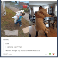 Crying, Cute, and Dank: cry daisy:  blshiit.  BEFORE AND AFTER  The ratio of dog to boy stayed constant that's so cute  749,077 notes