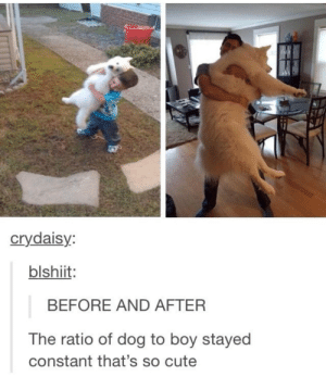Cute, Boy, and Dog: crydaisy  blshiit  BEFORE AND AFTER  The ratio of dog to boy stayed  constant that's so cute The ratio of dog to boy