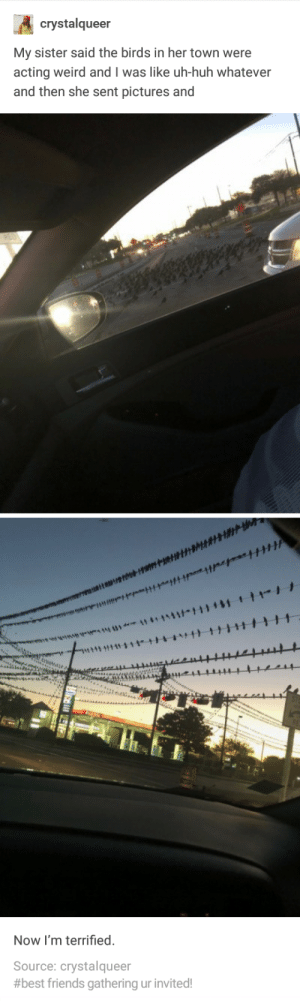 Friends, Huh, and Weird: crystalqueer  My sister said the birds in her town were  acting weird and I was like uh-huh whatever  and then she sent pictures and  Now I'm terrified  Source: crystalqueer  #best friends gathering ur invited! An Omen