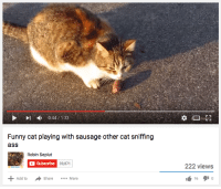 Ass, Funny, and Cat: ct  0:44/133  Funny cat playing with sausage other cat sniffing  ass  abschibe 39,871  222 view:s  Add toShare...  16