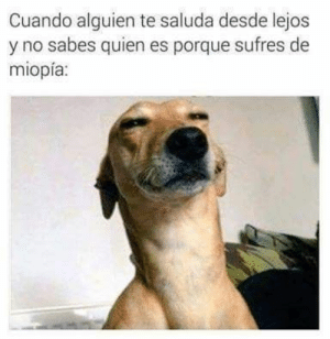Crazy, Dank, and Funny: Cuando alguien te saluda desde lejos  y no sabes quien es porque sufres de  miopía: FUNNY - HILARIOUS  #lol #lmao #hilarious #laugh #photooftheday #friend #crazy #witty #instahappy #joke #jokes #joking #epic #instagood #instafun  #memes #chistes #chistesmalos #imagenesgraciosas #humor #funny  #amusing #fun #lassolucionespara #dankmemes  #dank  #funnyposts #haha #memondo #funnypictures #youtube #instagram