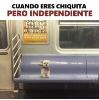 ean: CUANDO ERES CHIQUITA  PERO INDEPENDIENTE  NEW YORKERS KEEP  NEW YORK SAFE  ean on door