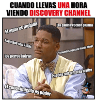 25 Best Discovery Channel Memes Middle Memes Sharked