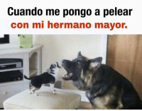 Mayor, Con, and Hermano: Cuando me pongo a pelear  con mi hermano mayor. (By David Ag) Cabroworld