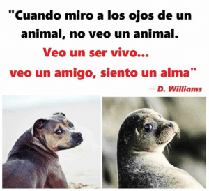 "Memes, Animal, and 🤖: ""Cuando miro a los ojos de un  animal, no veo un animal  Veo un ser vivo...  veo un amigo, siento un alma  _ D. Williams Tremendo verdad de D. Williams."