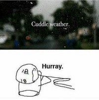 Memes, 🤖, and Hurray: Cuddle weather  Hurray
