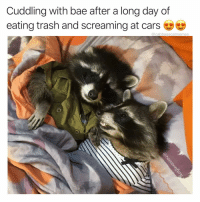 Bae, Trash, and Dank Memes: Cuddling with bae after a long day of  eating trash and screaming atcars  @cabbagecatmemes @raccoonfury