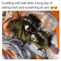 30 Of The Most Hilarious Animal Pictures That Will Make Your Day: Cuddling with bae after a long day of  eating trash and screaming at cars  @ cabbagecatmemes 30 Of The Most Hilarious Animal Pictures That Will Make Your Day