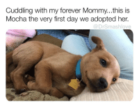 "Bless Up, Goals, and Lmao: Cuddling with my forever Mommy...this is  Mocha the very first day we adopted her.  @DrSmashlove Everybody got they own wealth goals, mines is simple: be rich enough to pay professional contractors to festoon my crib with lights every year so I can have one of ""those"" cribs lmao like I don't een really celebrate (tho I love Xmas generally) I just wanna stunt - like I might heck around and have Santa on a lil roller coaster sleigh riding dirty in my front lawn the whole month of December why not? If u got that guap u can do powerful christmassy things like that bless up 😍😂😂 (Slide 1: reddit u-IreneM100, slide 2: reddit u-Ziggy_starr)"