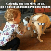 😂😂😂😂😂😂 pettypost pettyastheycome straightclownin hegotjokes jokesfordays itsjustjokespeople itsfunnytome funnyisfunny randomhumor animalhumor: Curiousity may have killed the cat,  but it's about to scare the crap out of the dog  boop 😂😂😂😂😂😂 pettypost pettyastheycome straightclownin hegotjokes jokesfordays itsjustjokespeople itsfunnytome funnyisfunny randomhumor animalhumor