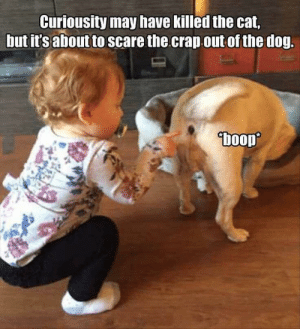 A life lesson for both of them: Curiousity may have killed the cat,  but it's about to scare the crap out of the dog.  boop A life lesson for both of them