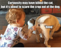 Dog Boop: Curiousity may have killed the cat,  but its aboutto scare the crap out of the dog.  boop