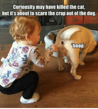 Damn shame it's not a video.....: Curiousity may have killed the cat,  but it'saboutto Scare the crap.out of the dog.  boop Damn shame it's not a video.....