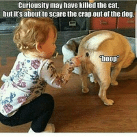 Dog Boop: Curiousity may have killed the cat,  butit's aboutto Scare the.crap.out of the dog.  boop