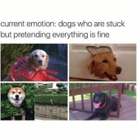 @hilarious.ted is my favourite animal memes page: current emotion: dogs who are stuck  but pretending everything is fine @hilarious.ted is my favourite animal memes page