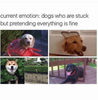 Dogs, Funny, and Who: current emotion: dogs who are stuck  but pretending everything is fine Yup. This is me.