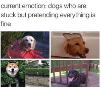 Dogs, Funny, and Asking: current emotion: dogs who are  stuck but pretending everything is  fine IM FINE STOP ASKING
