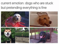 Dogs, Humans of Tumblr, and Who: current emotion: dogs who are stuck  but pretending everything is fine