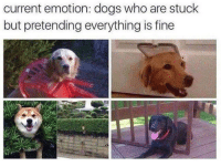 Dogs, Memes, and 🤖: current emotion: dogs who are stuck  but pretending everything is fine Me rn 😂