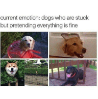 Dogs, Who, and Fine: current emotion: dogs who are stuck  but pretending everything is fine Nothing to see here!
