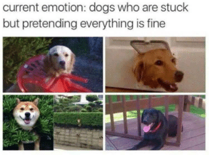 Dank, Dogs, and Memes: current emotion: dogs who are stuck  but pretending everything is fine Me irl by ScruffyAF MORE MEMES
