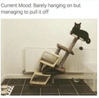 Mood, Humans of Tumblr, and Current Mood: Current Mood: Barely hanging on but  managing to pull it off