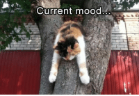 Animals, Cats, and Funny: Current mood Current mood: all of these animals. Here are 15 memes to make your day even better.#animals # cats # funny animals # funny cats # cat memes # spirit animals # animal memes # current mood # funny memes #animal photos