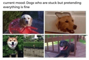 Dogs, Mood, and Current Mood: current mood: Dogs who are stuck but pretending  everything is fine Me irl