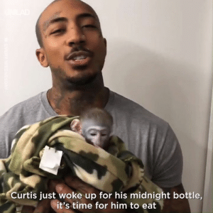 This is what the average midnight routine looks like for Curtis the baby monkey... His owner cares for him as if he's his own child 🙌❤️️: Curtis just woke up for his midnight bottle,  it's time for him to eat This is what the average midnight routine looks like for Curtis the baby monkey... His owner cares for him as if he's his own child 🙌❤️️