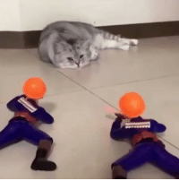 9gag, Memes, and Games: Cut the bullsh*t hooman, I ain't playing these games with you. @meowed - meowed cat doesntcare 9gag