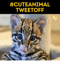 Cute Animals, Memes, and 🤖:  #CUTE ANIMAL  TWEETOFF You need this today. Trust us.