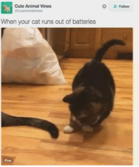 Animals, Anime, and Cats: Cute Animal Vines  When your cat runs out of batteries Animal Memes.