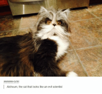 Tumblr Bullshit 45: fuck timezones re-release special: cute  Atchoum, the cat that looks like an evil scientist Tumblr Bullshit 45: fuck timezones re-release special