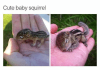 Cute, Memes, and Squirrel: Cute baby squirrel