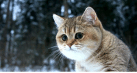 Cute Cat is walking while snowing from sky: Cute Cat is walking while snowing from sky