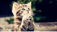 cute cat photo-SO LOVELY TO WATCH: cute cat photo-SO LOVELY TO WATCH