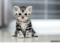 Just look at this adorable face doesn't everyone just love the kittens ?: Cute Cat Pics Just look at this adorable face doesn't everyone just love the kittens ?