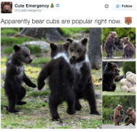 where was my invite?: Cute Emergency  A  Follow  acute Emergency  Apparently bear cubs are popular right now. where was my invite?