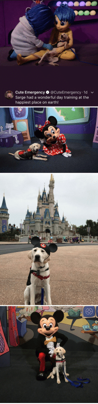 Cute, Best, and Earth: Cute Emergency @CuteEmergency 1d v  Sarge had a wonderful day training at the  happiest place on earth! <p>best thing ever</p>