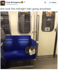 *cues music*: Cute Emergency  Follow  acute Emergency  she took the midnight train going anywhere *cues music*