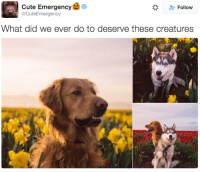 Acutal: Cute Emergency  o  Follow  acute Emergency  What did we ever do to deserve these creatures