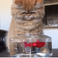 Cute FIshy ...Come here!! COme little Fishy! #Cats #Love #Fish #Playing #Water #CatsLoveFish: Cute FIshy ...Come here!! COme little Fishy! #Cats #Love #Fish #Playing #Water #CatsLoveFish