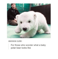 I want one until it becomes like 18389294 pounds and eats my foot: cute:  For those who wonder what a baby  polar bear looks like I want one until it becomes like 18389294 pounds and eats my foot